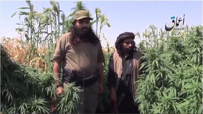 isis-marijuana-lebanon.jpg