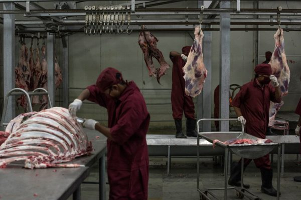 Beef  being processed in the Indian state of Uttar Pradesh. Credit Andrea Bruce for The New York Times