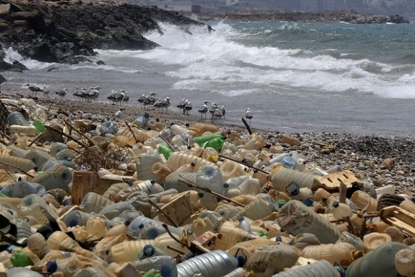 (FILES) In this file photo taken on July 19, 2018 seagulls search for food near a sewage discharge area next to piles of plastic bottles and gallons washed away by the water on the seaside of Ouzai, south of Beirut. Need another reason to hate plastics piling up in the environment? A study in the journal PLOS ONE on August 1, 2018 found that degrading plastics emit powerful greenhouse gases like methane and ethylene, and are a previously unaccounted-for source of these heat-trapping pollutants.Plastic water bottles, shopping bags, industrial plastics and food containers were all tested as part of the study. / AFP PHOTO / JOSEPH EID