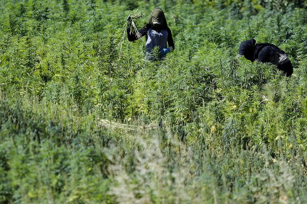 Change could be coming to the Bekaa Valley, as the Lebanese government is mulling the advice of McKinsey & Co., a prominent global consulting firm, to legalize the cannabis crop.