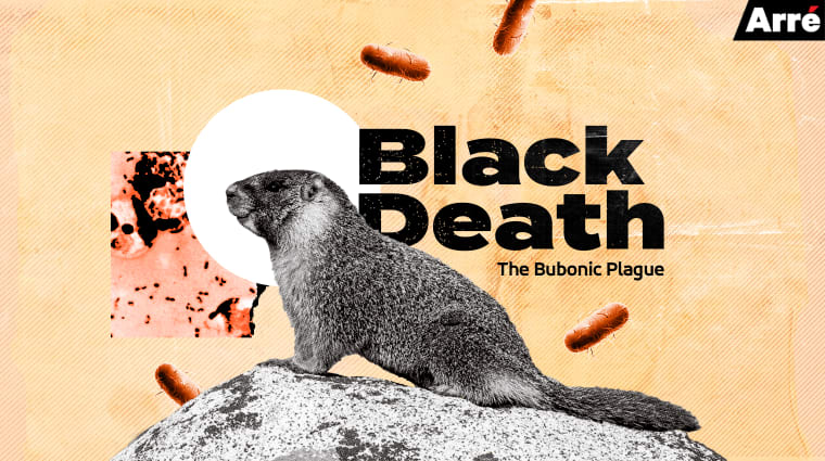 2 cases of deadly bubonic plague confirmed in China's ...